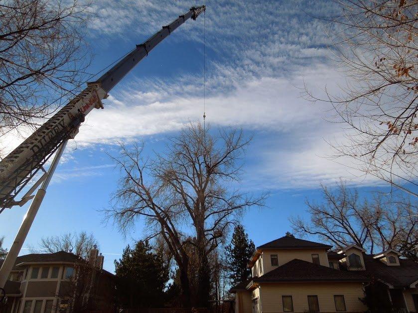 case study tree removal Denver