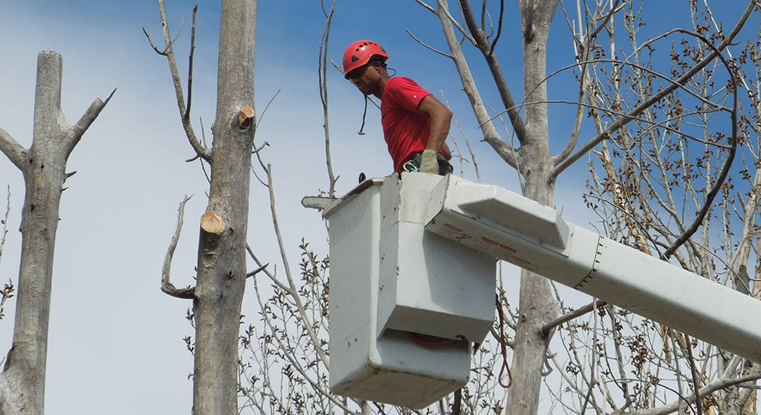 Tree Trimming Service In Denver CO