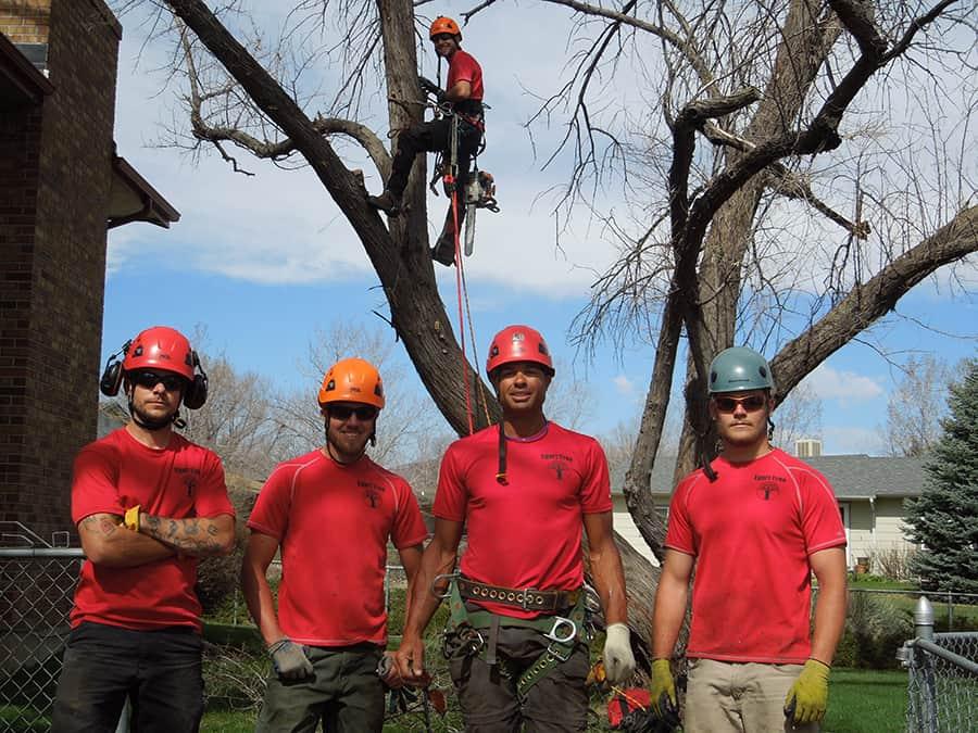 Tree removal bucket truck in Denver CO