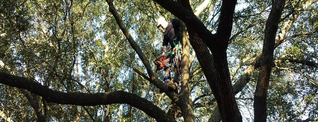 Denver CO Tree Pruning