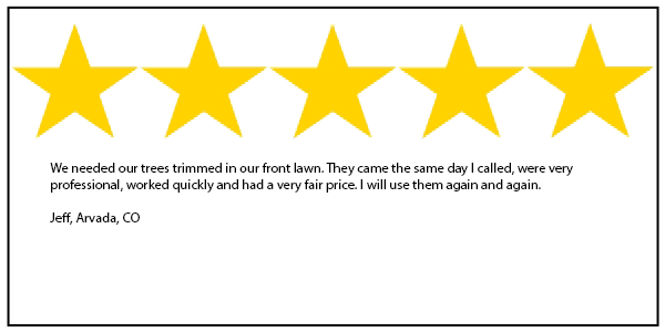Arvada tree service 5 star review