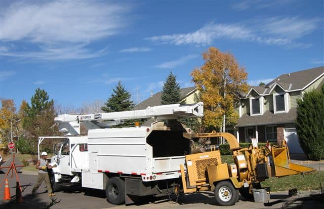 tree removal in Arvada CO