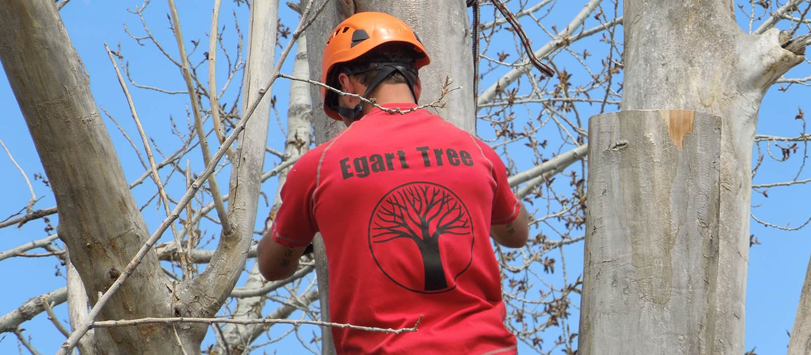 tree service and tree removal pros in Arvada CO