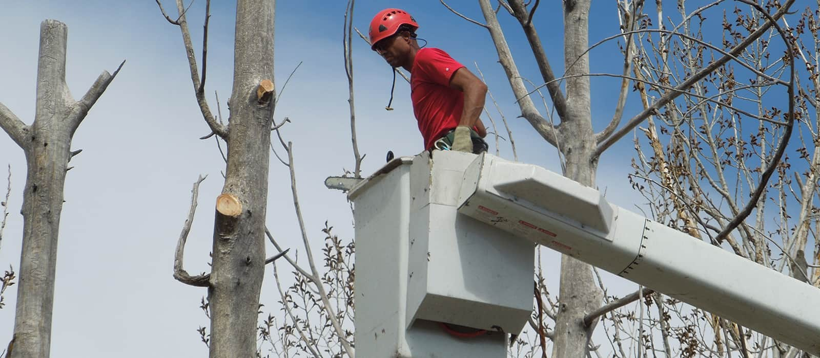 Tree Service And Removal In Denver CO