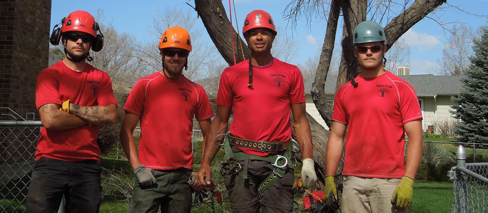 tree service company Wheat Ridge