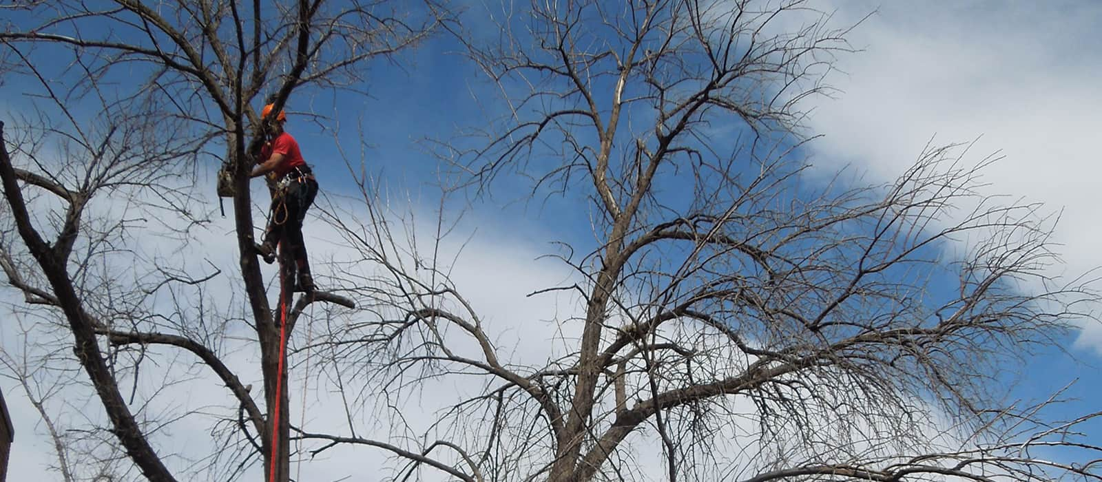 Tree Service And Removal In Wheat Ridge Co
