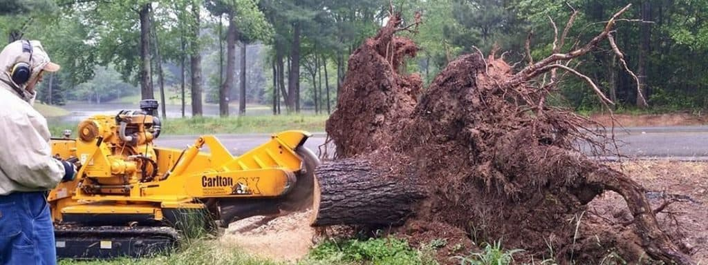 stump grinding example in Denver