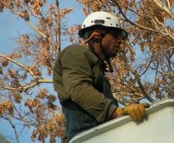 arborist tree care in Wheat Ridge TX