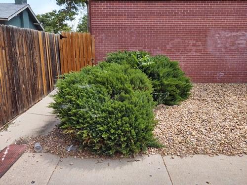 best-denver hedge removal