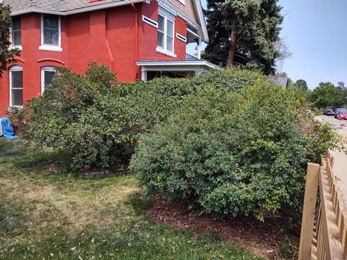 best denver shrub removal