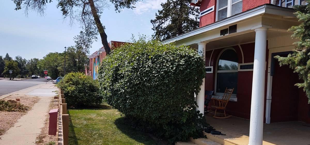 denver area bush shrub and hedge removal