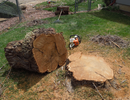 Stump Removal | Colorado